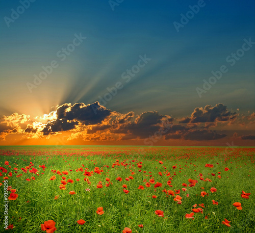 canvas print motiv - Mykola Velychko : Green field with red poppies under dramatic cloud