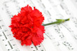 Red carnation flower on musical notes page