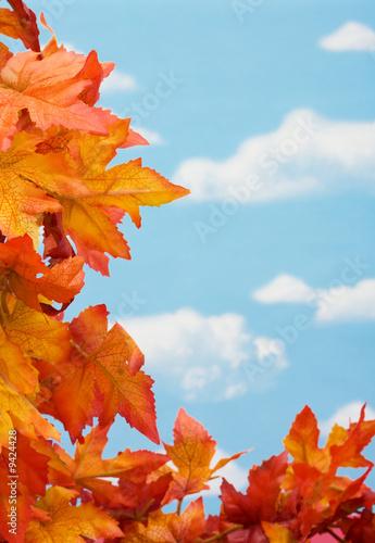 Foto-Kissen - Bright coloured fall leaves on sky background, fall harvest