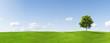 Leinwandbild Motiv Panorama of a maple tree on a meadow against a blue sky