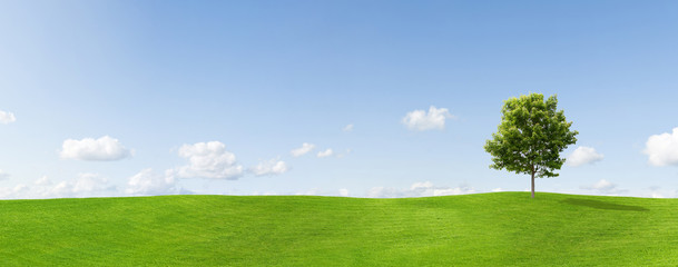 Panorama of a maple tree on a meadow against a blue sky