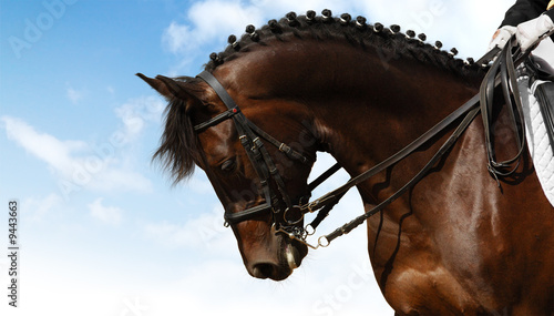 dressage - equestrian sport