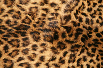 Fototapeta skin of the leopard