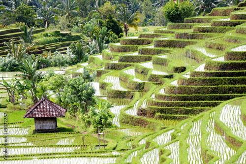 Papiers peints Bali Bali 0161