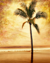 A Sepia-toned Palm Tree Done I...