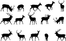 Red Deer Silhouette,vector Col...