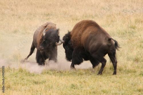 Staande foto Buffel Bison Battleground