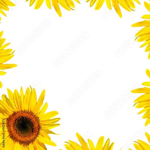 Poster Zonnebloem Sunflower Petal Beauty