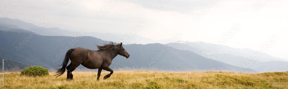 Fototapety, obrazy: Black stallion