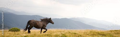 Spoed Foto op Canvas Paarden Black stallion
