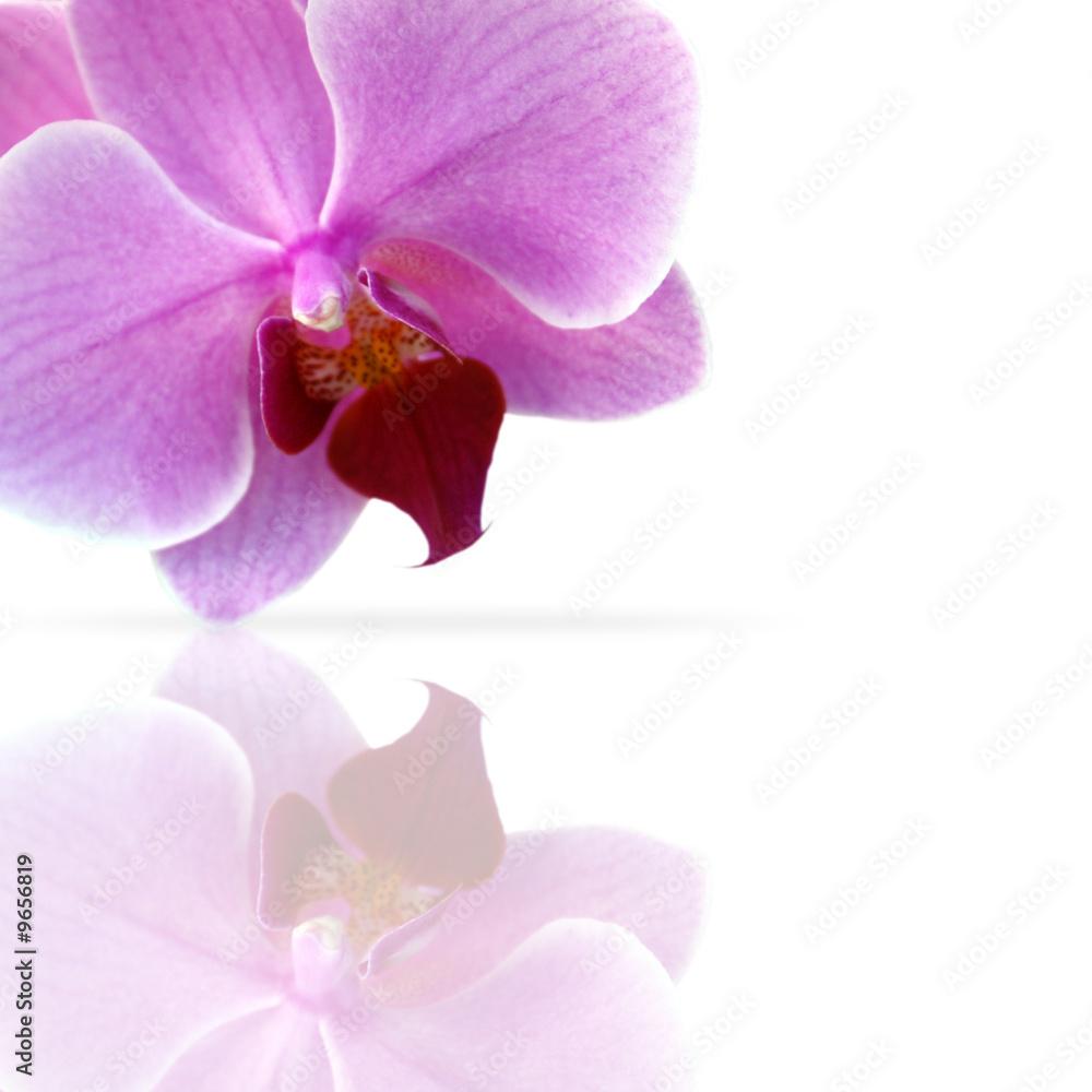 Doppelrollo mit Motiv - Orchidee