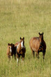 canvas print picture - Three horses standing in a field with grass up to their knees