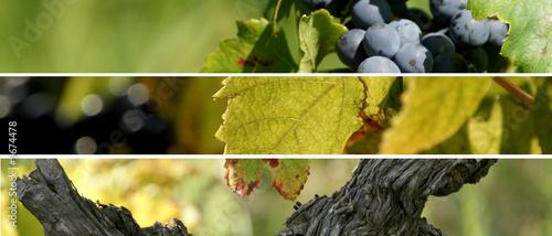 Fotografía montage vignes