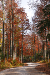 Panel SzklanyForest in autumn