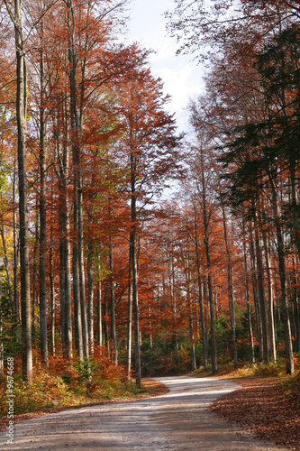 Forest in autumn - 9674668