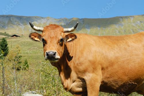 La pose en embrasure Vache vache en alpage