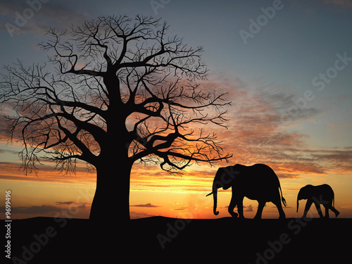 Ingelijste posters Zoo Group of elephant in africa