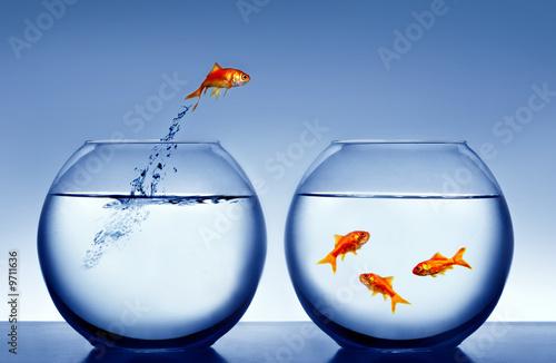 Foto-Flächenvorhang ohne Schienensystem - goldfish jumping out of the water (von Mikael Damkier)