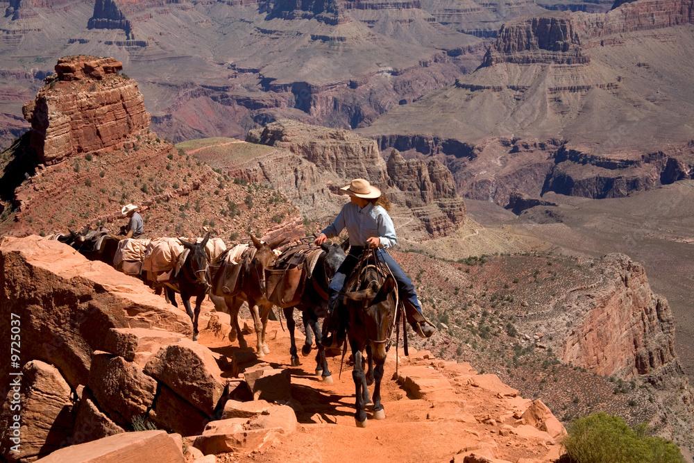 Reiter mit einer Gruppe Maulesel beim Aufstieg im Grand Canyon