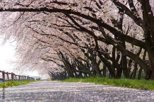 Foto-Schiebegardine ohne Schienensystem - cherry blossom