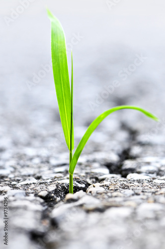 Green grass growing from crack in old asphalt pavement Poster