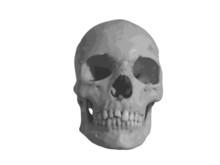 Crâne - Vectoriel