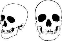 Human Skulls In Full-face And ...