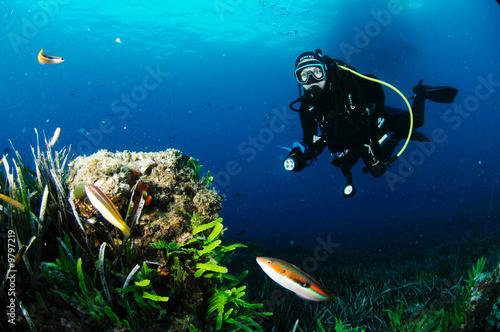 Valokuva  girelle et plongeur 2