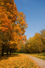 Autumn Landscape With Bright Y...