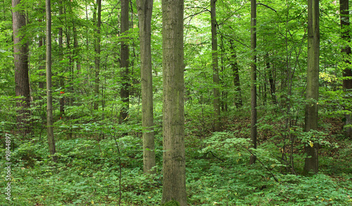 Cadres-photo bureau Foret brouillard very nice natural czech forest in the spring