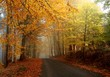 Autumn colors in misty forest