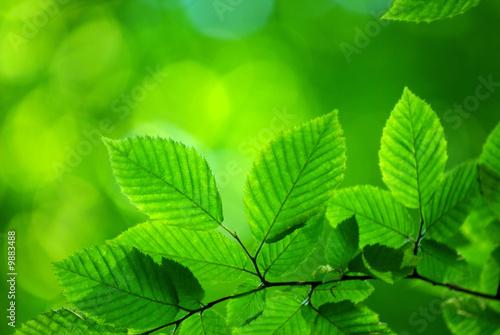 Foto-Duschvorhang - green leaves (von Pakhnyushchyy)