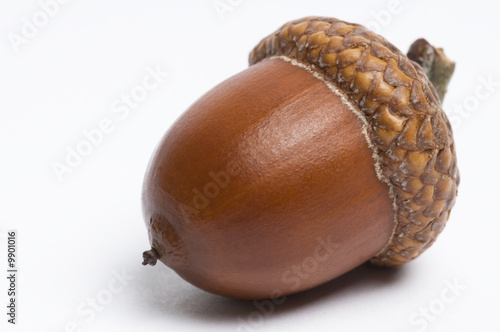 Photo Simple macro image of an acorn isolated on white.