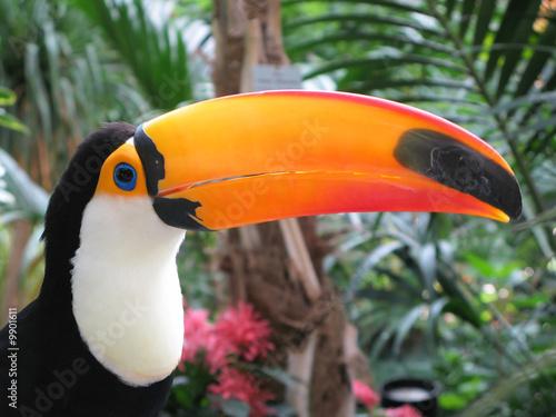 Toucan bird #9901611