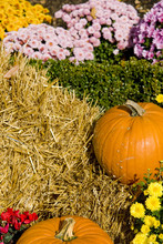 A Shot Of Some Pumpkins, Decorated With Straw And Flowers