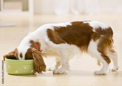 Photo  Hungry dog eating food from bowl