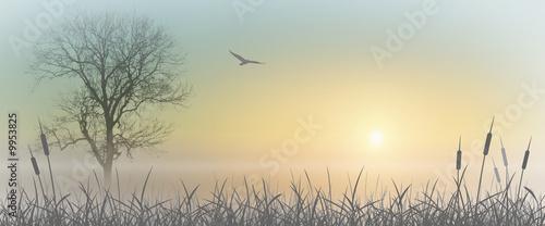 фотография  Misty Sunrise Landscape with Reeds