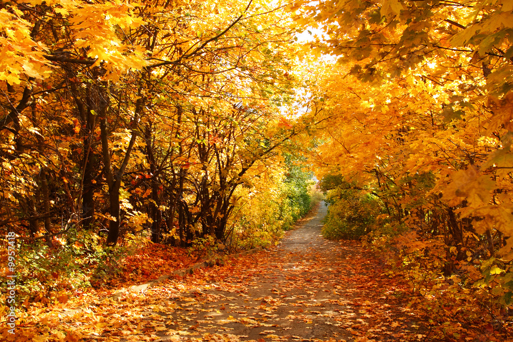 Fototapety, obrazy: The road through the autumnal park. Yellow trees.