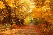 Leinwandbild Motiv The road through the autumnal park. Yellow trees.