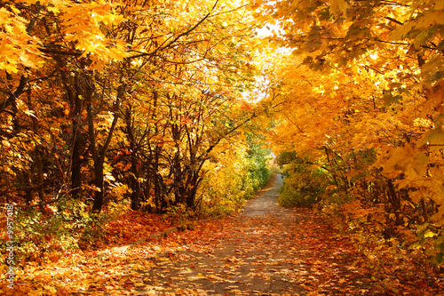 Door stickers Orange Glow The road through the autumnal park. Yellow trees.