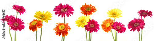 Fotografia Six bunch of colorful gerbera flowers