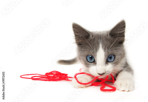 Canvas Prints Cat Kitten playing with yarn