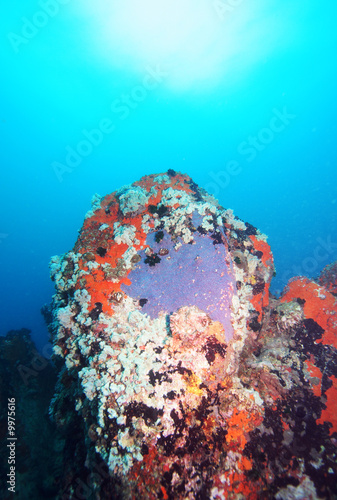 Fototapety, obrazy: Colorful underwater rock formation in the Indian Ocean