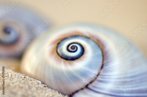 Photo Stands Spiral Schneckenhaus am Strand