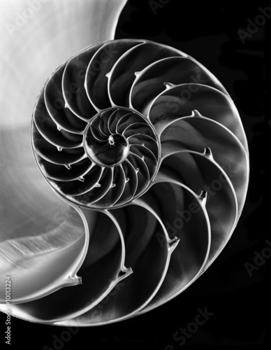 Nautilus shell interior