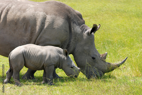 Poster Rhino close by mother