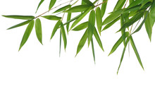 Border Of Bamboo-leaves Isolated On A White Background.