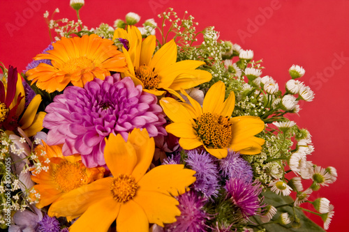 Fototapety, obrazy: bunch of various flowers on the red background