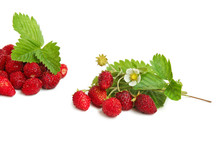 Wild Strawberries Plant With Green Leaves And Flower