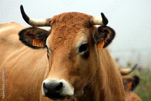 Stickers pour portes Vache T'as de beaux yeux tu sais